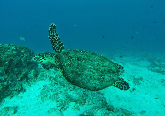 Pulau Weh, Indonezja: photo0.jpg