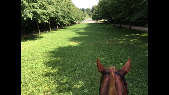 Gif-sur-Yvette, ฝรั่งเศส: Riding down an allée toward the gardens in Parc de St. Cloud.