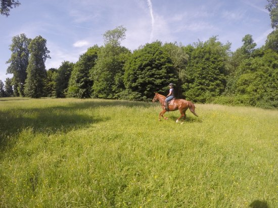 Gif-sur-Yvette, ฝรั่งเศส: Cantering in Parc de St. Cloud