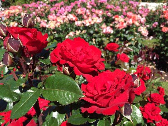 Four Roses Tour Review