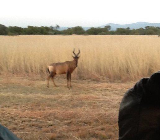 Mabula Private Game Reserve, South Africa: Safari