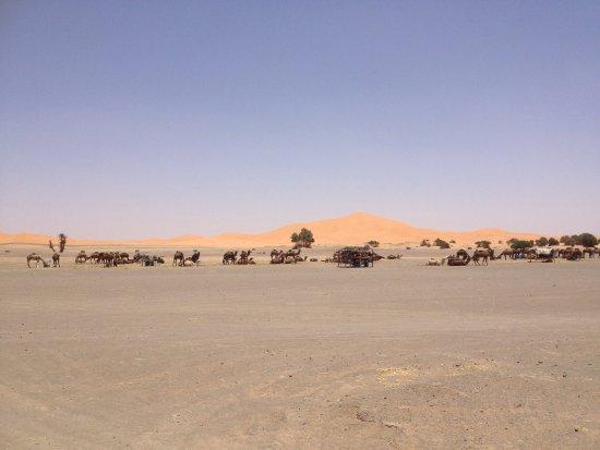 Auberge Camping Ocean Des Dunes: photo2.jpg