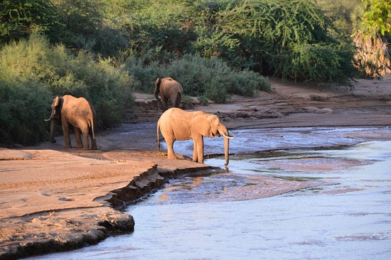 Sarova Shaba Game Lodge: Elephants would come to the river to drink