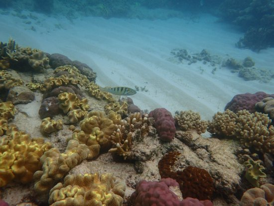 Cape Tribulation, Australia: Some coloured coral to be seen