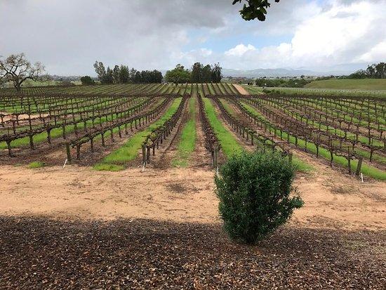 Sculpterra Winery & Sculpture Garden: View of the vineyards.