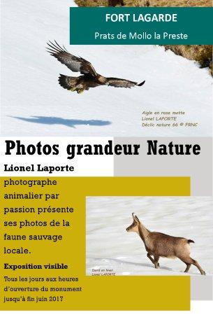 Prats de Mollo la Preste, Prancis: Exposition photos Nature jusqu'au 09 juillet 2017