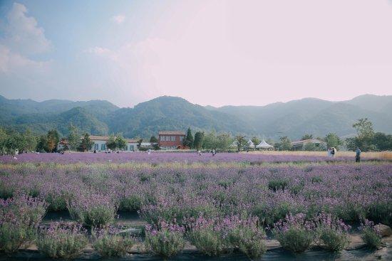 Goseong-gun: мини-отели