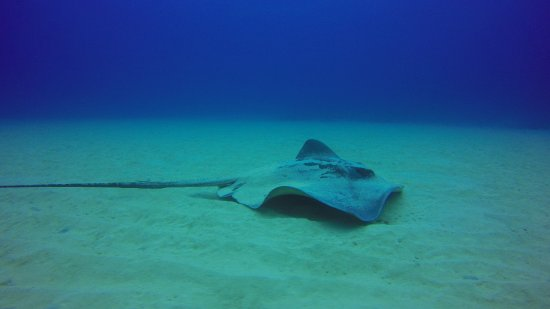 Arrieta, Spanien: the mother of all rays :-)