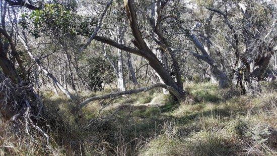 Thredbo Village, Australia: photo1.jpg