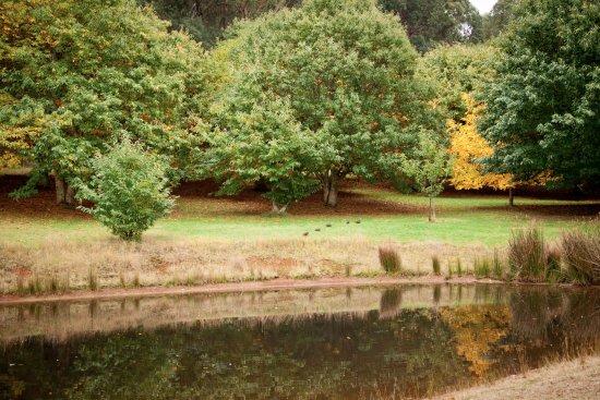 Narbethong, Australia: chestnut glade