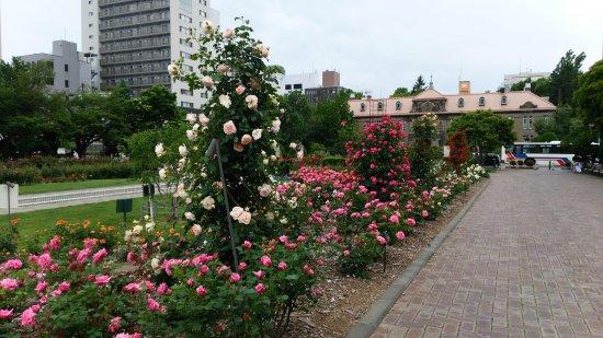 Odori Park: DSC_2909_large.jpg