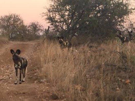 Kruger nasjonalpark, Sør-Afrika: Kruger National Park