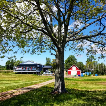 Canning, Canada: Blomidon Estate Winery