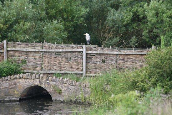 Amble, UK: Heron resting on the bridge
