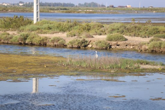 Amposta, Spanien: possibly an egret or a stork