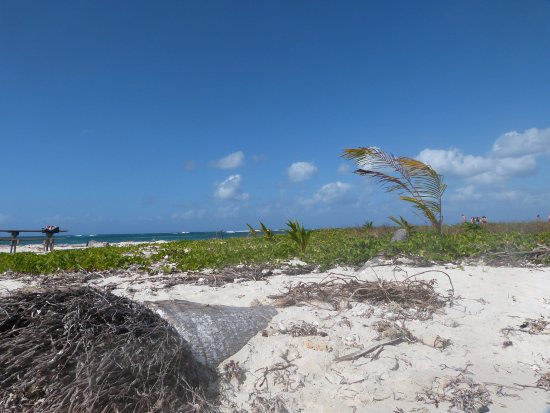 Le Gosier, Guadeloupe : ilêt carret