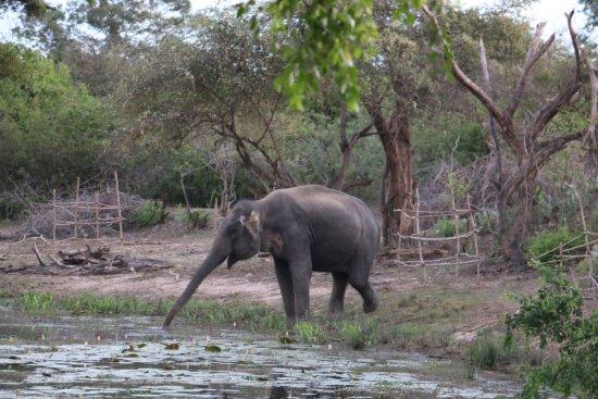 Tissamaharama, Sri Lanka: 20170621012304_IMG_6186_large.jpg