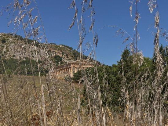 Tempio di Segesta (Tempio Influenza Greca): photo5.jpg