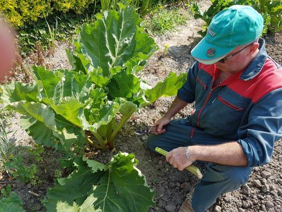 Alzonne, فرنسا: Premières cueillette de l'été. Claude ramasse ces légumes avant de passer en cuisine