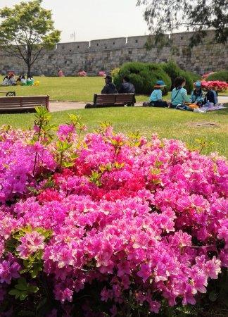Suwon, Corea del Sur: picnic area