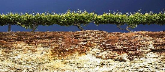 Penola, ออสเตรเลีย: Terra Rossa and limestone soil profile