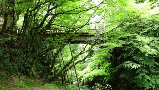 Kaga, Japan: コオロギ橋