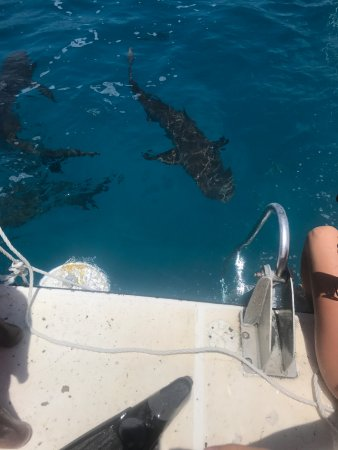 New Providence Island: Shark site