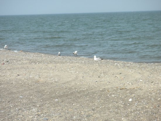 Mentor, OH: Beach with seagulls