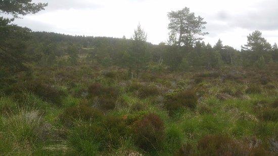 Aviemore, UK: Moor - Heidelandschaft um Loch Eilein