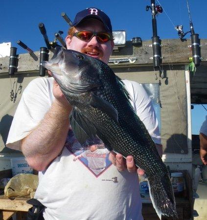 Fairhaven, MA: Quality Sea Bass