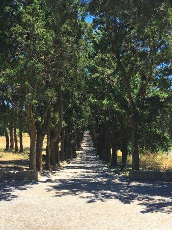 Filerimos, Grecja: кипарисовая роща, ведущая к кресту