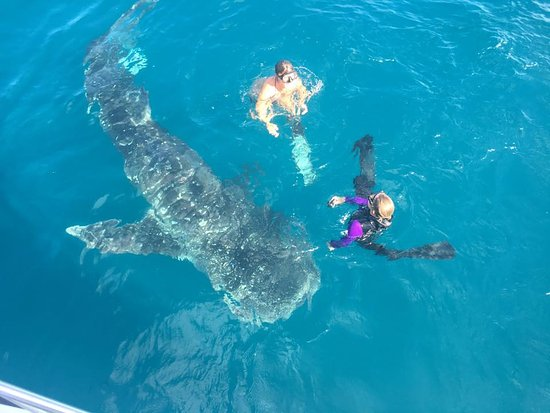 Singer Island, Φλόριντα: Whaleshark sighting