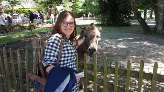 Beernem, Belgia: friendly donkey