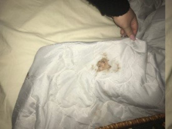 Seaside Heights, NJ: this photo is of dried vomit on our blanket