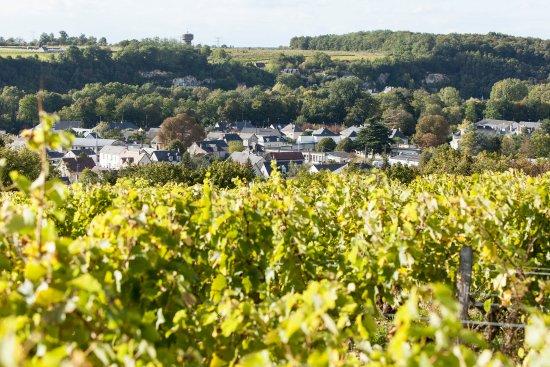 Vernou-sur-Brenne, فرنسا: Un petit aperçu du Clos, cuvée emblématique de notre domaine
