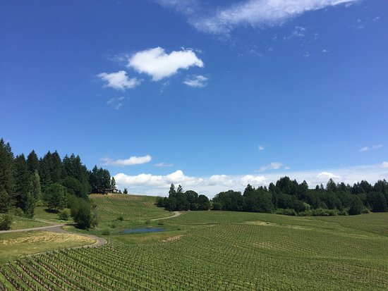 Gaston, OR: We had a nice time there. We made a wine tasting in our trip to Portland from the coast. They ha
