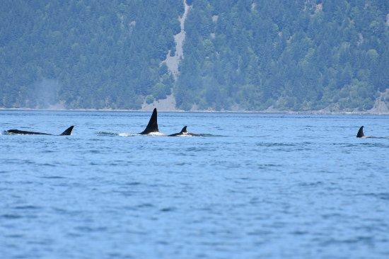 Cowichan Bay, Canada: DSC_2358_large.jpg