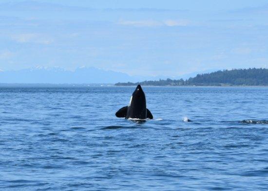 Cowichan Bay, Canada: 20170622_092200_large.jpg
