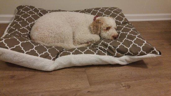 Gerton, Βόρεια Καρολίνα: Sonny's own bed in our room