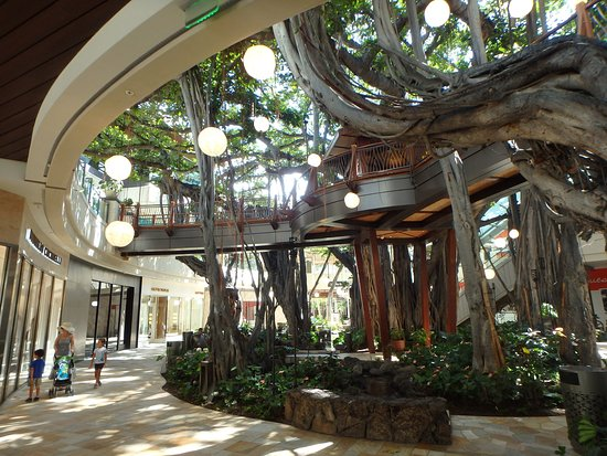 Original Banyan Tree Surrounded By Shops Picture Of