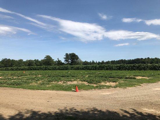 Northborough, ماساتشوستس: Tougas Family Farm
