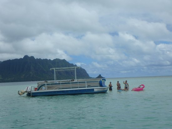 Kaneohe, Hawái: Flamingo stranded in middle of the bay