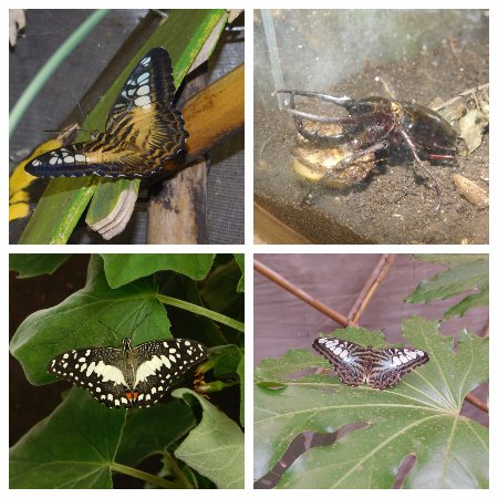 Viagrande, Italië: Casa delle Farfalle