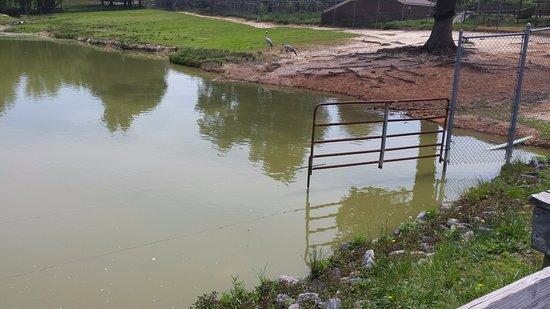 Moseley, Βιρτζίνια: This is part of the big Savannah enclosure