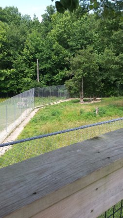 Moseley, VA: The zebra enclosure next to the zebra enclosure. Chainlink fences..