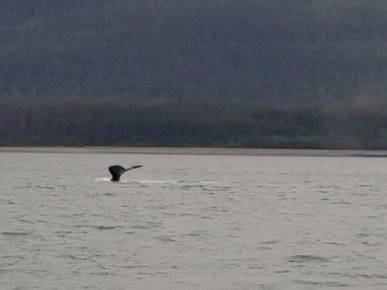 Southeast Exposure Outdoor Adventure Center: whale tale