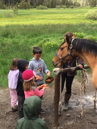 Chester, CA: Staff will give kids carrots and apples to feed the horses.