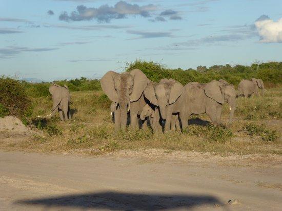 Kasane, Botswana: Olifanten