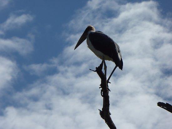 Kasane, Botswana: Maraboe