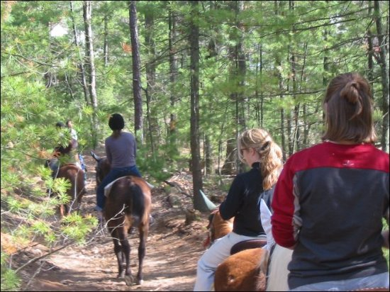Londonderry, NH: Horseback trail ride